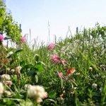 Biokult Organic Flower