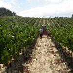 Greek organic fields