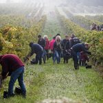 workers among organic vines