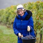 Carefully selected each organic grape of the best quality