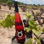 Delicious Spanish Organic Wines of the Bobal Grape