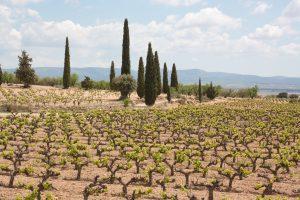 Spanish organic wines producer Bodegas Iranzo