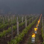 Frost in Bordeaux Impacts 2017 Vintage French Organic Wine