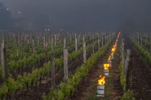Frost impacts 2017 Bordeaux French organic wine