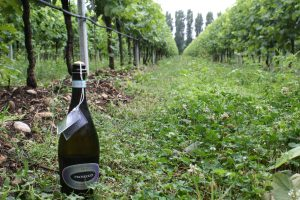 vegan wines include Pizzolato Fields Prosecco