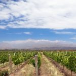 Inkarri - Chakana Andean Wines