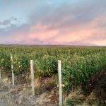organic wine vineyards Inkarri wines