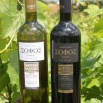 A Greek Organic Wine Adventure