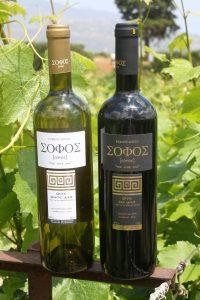 Greek organic wine Sofos