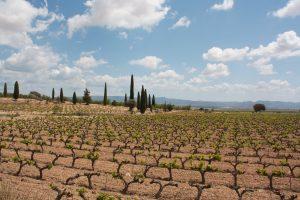 Spanish organic wine maker Bodegas Iranzo