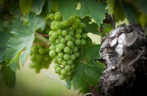 Best French Organic Wine
