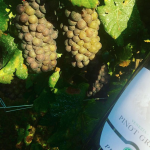 Organic Pinot Grigio New DOC