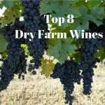 Top 8 Dry Farm Wines Worth Trying