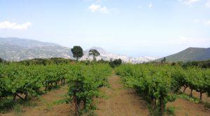 Domain Gioulis Organic Greek Wine