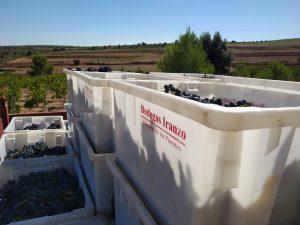 Bodegas Iranzo organic harvest 2019
