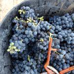 2019 European Organic Harvest