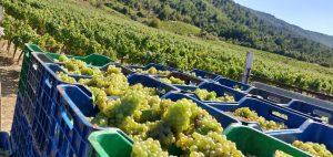 Domaine Gioulis Organic Harvest 2019