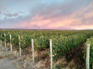 Inkarri Vineyards