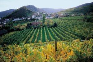 Biokult Best Organic Wines Austria