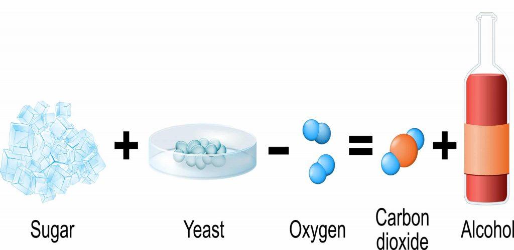 Yeast in Wine Fermentation