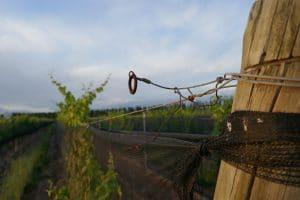 Inkarri Defining Natural Wine