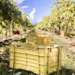 Italian Organic Wine Harvest 2020