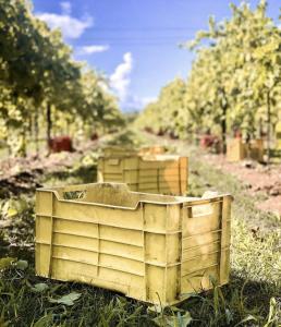 Pizzolato Italian Organic Wine Harvest 2020